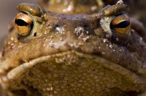 toads-3-1173317-m